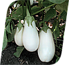 Семена баклажана Бибо F1 1000 семян Seminis