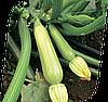 Семена кабачка Сцилли F1 500 семян Seminis