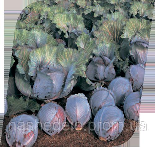 Семена капусты к/к Рокси F1 2500 семян Seminis
