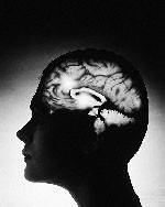 Заставим мозг соображать быстрее