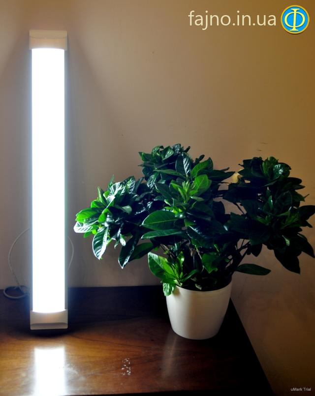 LED светильник Bellsom в работе