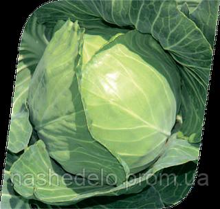 Семена капусты б/к Чэмп F1 2500 семян Seminis