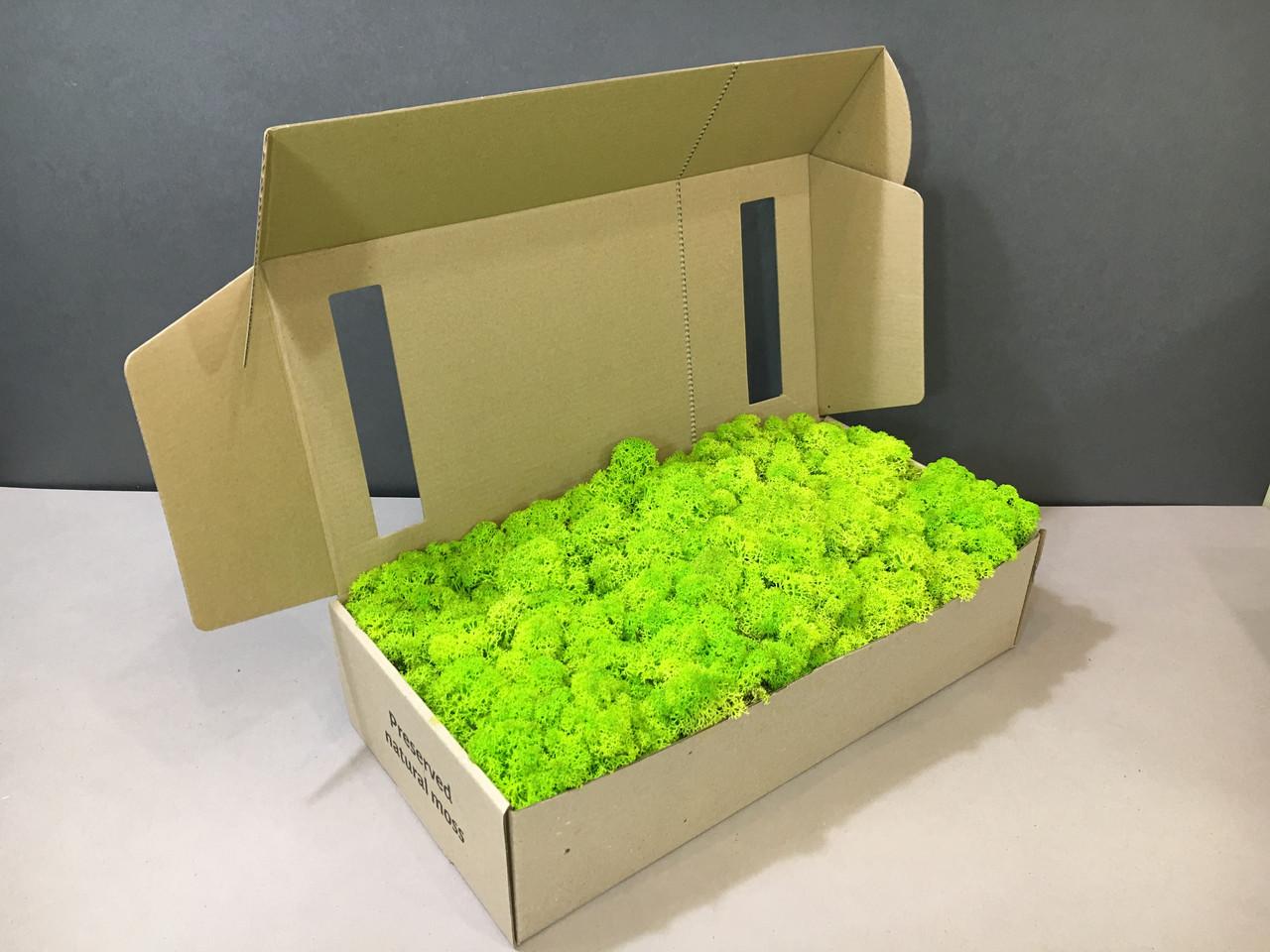 Стабилизированный мох в коробке (Spring)
