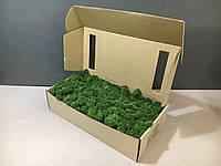 Стабилизированный мох в коробке (Moss Green)