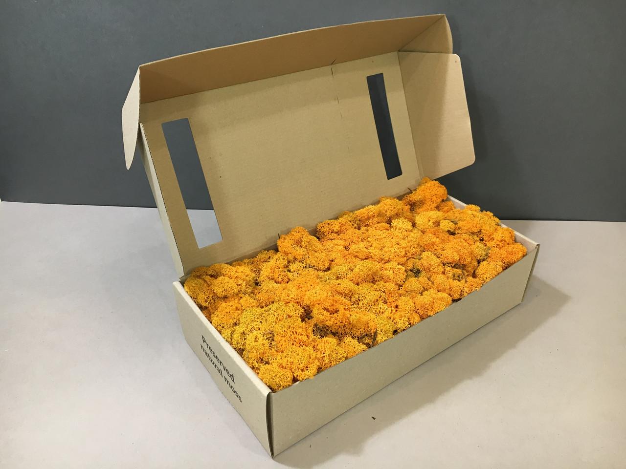 Стабилизированный мох в коробке (Autumn)