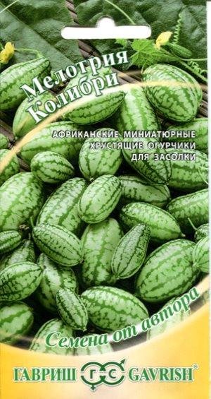 Мелотрия шершавая Колибри (мини-арбуз), 20шт
