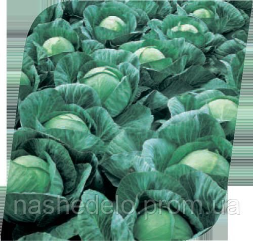Семена капусты б/к Ринда F1 2500 семян Seminis