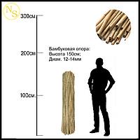 Бамбуковый ствол, опора L 1,5м диам. 12-14мм.