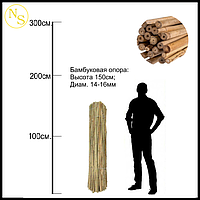 Бамбуковый ствол, опора L 1,53м диам. 14-16мм.