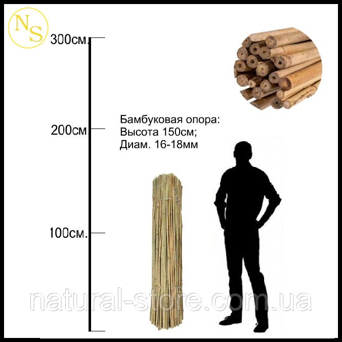 Бамбуковый ствол, опора L 1,5м д. 16-18мм.