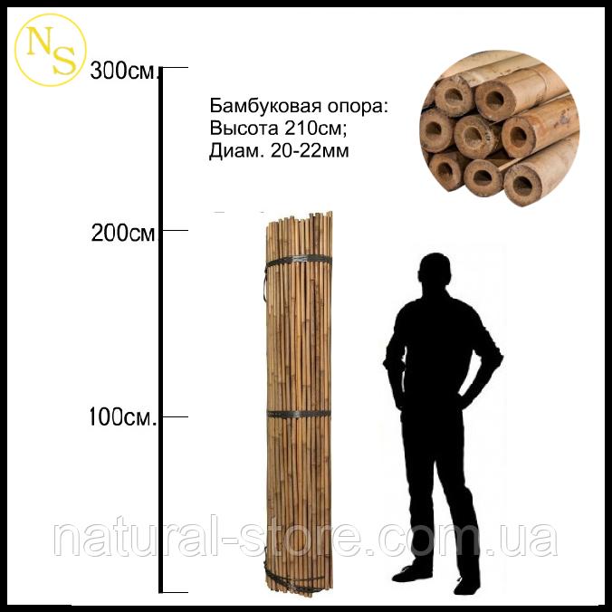 Бамбуковый ствол, опора L 2,13м. диам. 20-22мм.