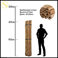 Бамбуковый ствол, опора L 2,13м. диам. 20-22мм., фото 1