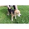 Щетка для грумминга собак Фурминатор Short Hair Giant Dog UNHAIRING  12,7см  c кнопкой!Акция, фото 2