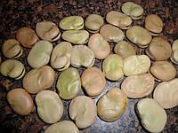 Насіння бобів, 50 шт