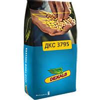 Семена кукурузы ДКС 3795 (ФАО 250)