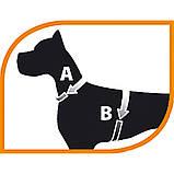 Шлея кожаная для собак GIOTTO Р LUXOR S Ferplast Ферпласт (черная,бежевая), фото 5