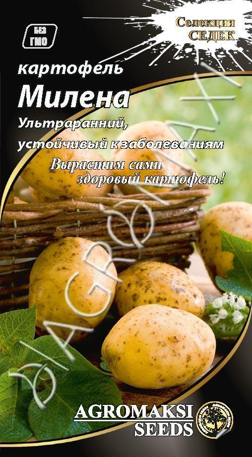 Картофель Милена 0.01 г Agromaksi