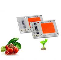 20W 30W Full Spectrum LED COB Chip Растение Увеличивает свет для цветения саженцев цветковых растений AC220V