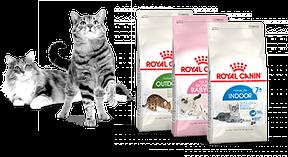 Сухой корм для кошек и котят