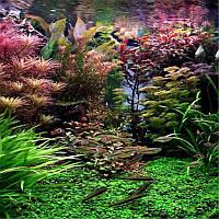 Egrow 1000 штук Аквариум Растение Семена Сосновые бордюры Raras Растениеs Водные украшения для танков рыбы Семена