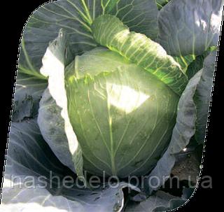 Семена капусты б/к Вестри F1 2500 семян Seminis