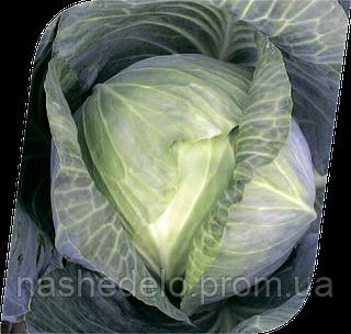 Семена капусты б/к Атрия F1 2500 семян Seminis