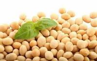 """Каліброванне насіння сої """"Максус""""1Ф.Схожість96%."""