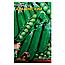Горох Адагумский  большой пакет 25 г, фото 2