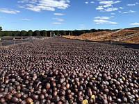 Кофе зеленый, Арабика 100% Бленд Желтый Катуаи-Красный Икату, 86,0 СОЕ баллов, ферма Dolce Cerrado, Бразилія