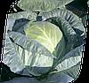 Семена капусты б/к Фундакси F1 2500 семян Seminis