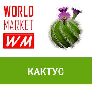 WM Кактус