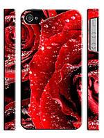 Чехол для iPhone 5/5s Цветы, Розы красные