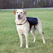 Trixie TX-28834 шлея-рюкзак для собак XL (нейлон) 31х17см,черный