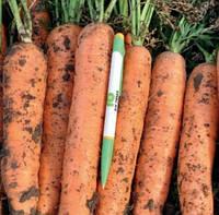 Морковь Фидра F1 (калібр.<1,6мм) 1000 000 сем. Рийк Цваан., фото 1