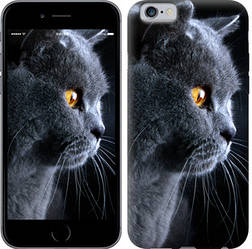 """Чехол на iPhone 6 Красивый кот """"3038c-45-328"""""""