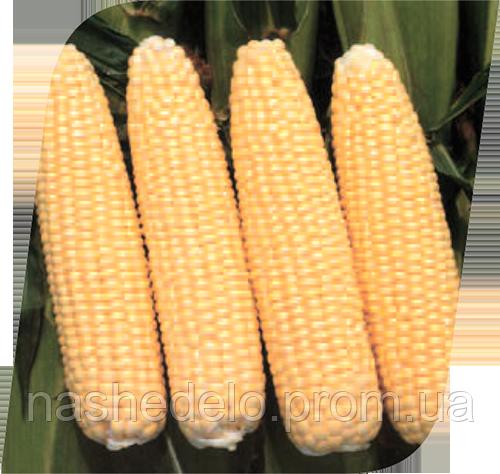 Семена кукурузы сахарной Челленджер F1 5000 семян Seminis