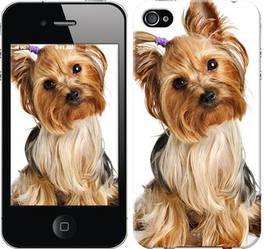 """Чехол на iPhone 4 Йоркширский терьер с хвостиком """"930c-15-328"""""""