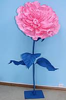 Ростовой бумажный цветок - пион, фото 1