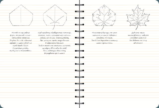 Скетчбук уроки рисования основные навыки Рисуем за 30 секунд апельсин