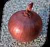Семена лука Грэйтфул Ред F1 250000 семян Seminis