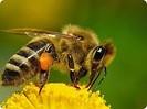 Магазин пчеловодства ПАСЕКА