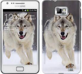 "Чехол на Samsung Galaxy S2 i9100 Бегущий волк ""826c-14-328"""