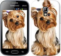 """Чехол на Samsung Galaxy S Duos s7562 Йоркширский терьер с хвостиком """"930c-84-328"""""""