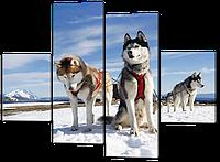 Картина из частей Сибирские хаски 126*93 см