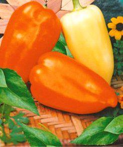 Семена перца Зоржа
