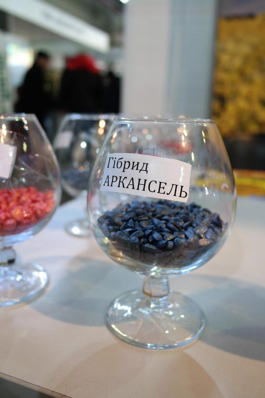 Семена подсолнечника Аркансель, под гранстар, 108-112 дней