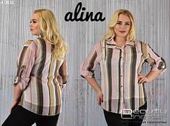 Блузы больших размеров