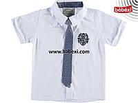 Рубашка  с галстуком для мальчика 12 лет
