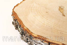 Срез дерева. Береза 21 - 25 см