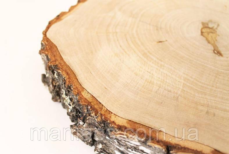 Зріз дерева. Береза 21 - 25 см